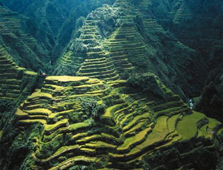 terrazas-de-arrozjp.jpg
