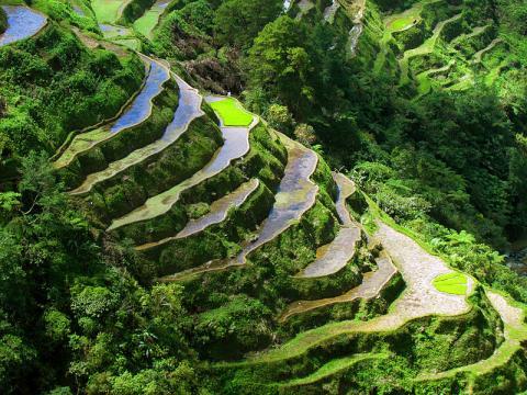 terrazas-arrozales.jpg